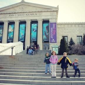 Chicago: Shedd Aquarium