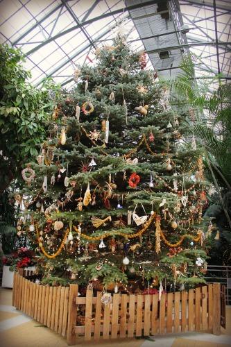 Krohn Conservatory Tree