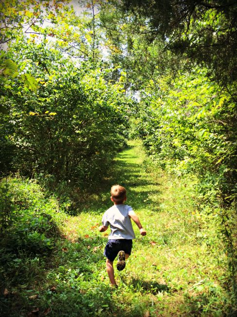 Wolsing Trails Henry