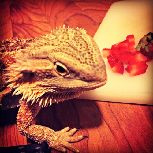 Strawberry Picking 2016 Dragon