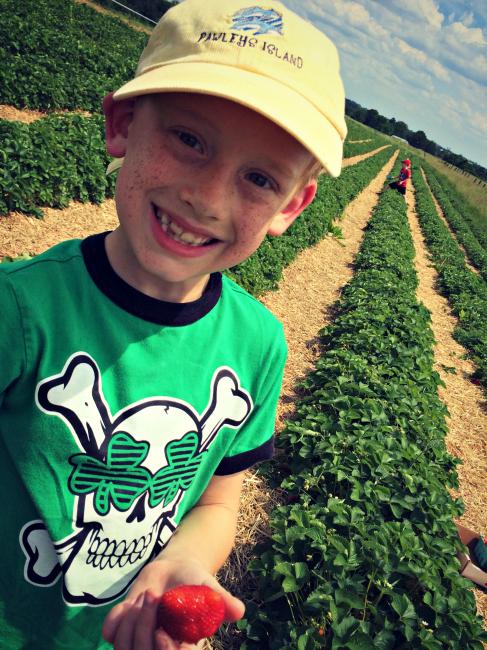 Strawberry Picking 2016 Sam