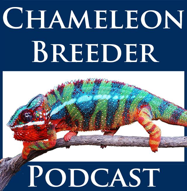 Chameleon Breeder Podcast logo