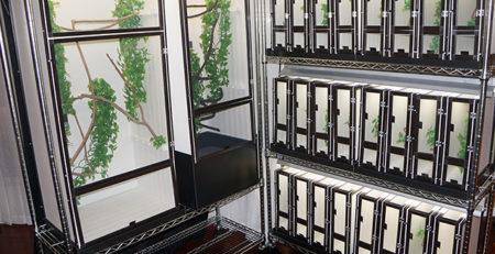 Chameleon cage rack breeding system