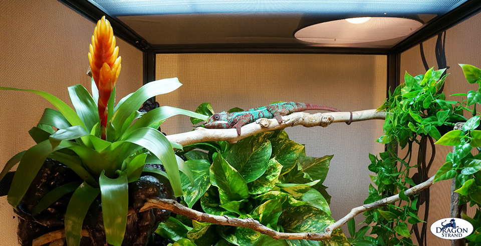 Upper Level Branching in chameleon cage setup