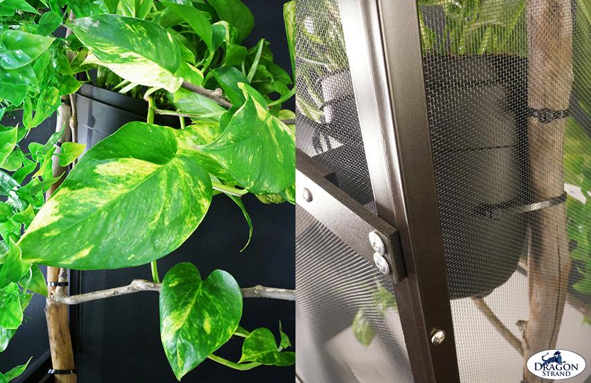 Chameleon Cage setup: Mounting a plant pot