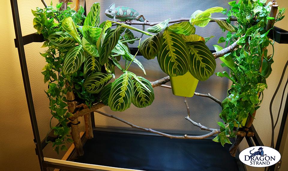 Atrium Chameleon Cage with Veiled Chameleon