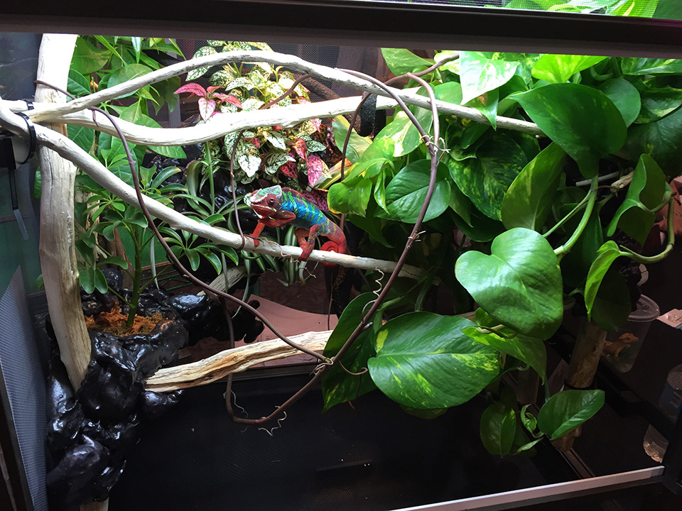 chameleon cage with foam used in background