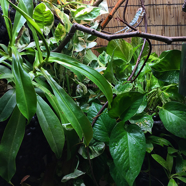 chameleon cage filled with plants