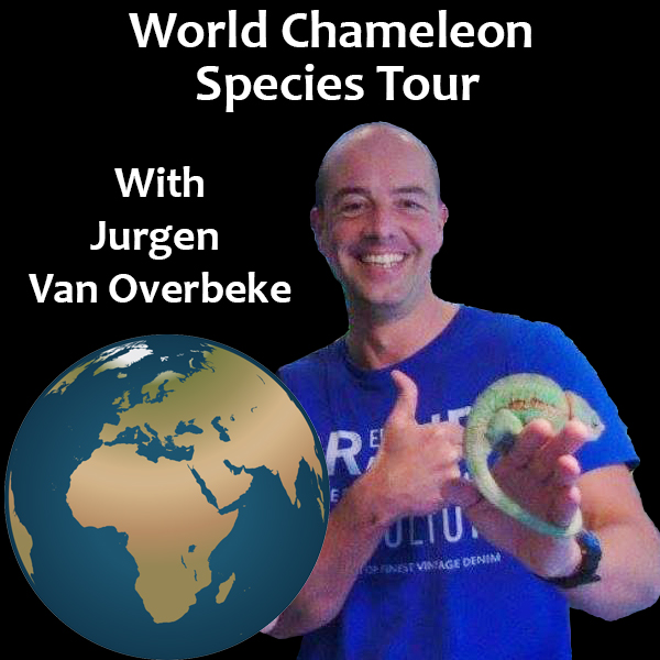 chameleon species of the world