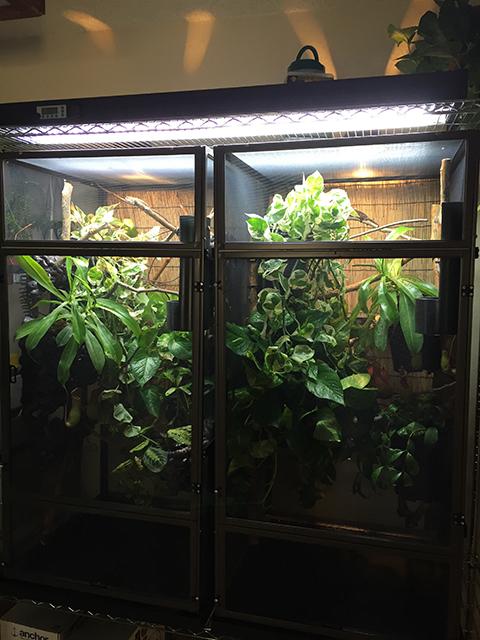 Dragon Strand Chameleon cages