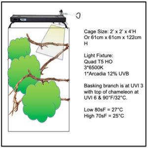 Chameleon Cage Plan