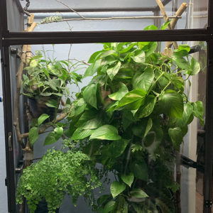 Medium Tall Clearside Atrium Enclosure with plant cover
