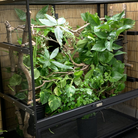 Planted cage with Dragon Ledges