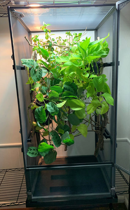 The New Tall Screen Cage
