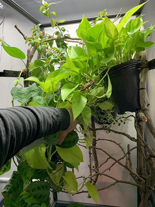 branch types
