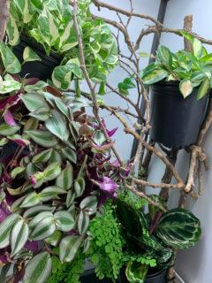 Chameleon Cage Plantscape