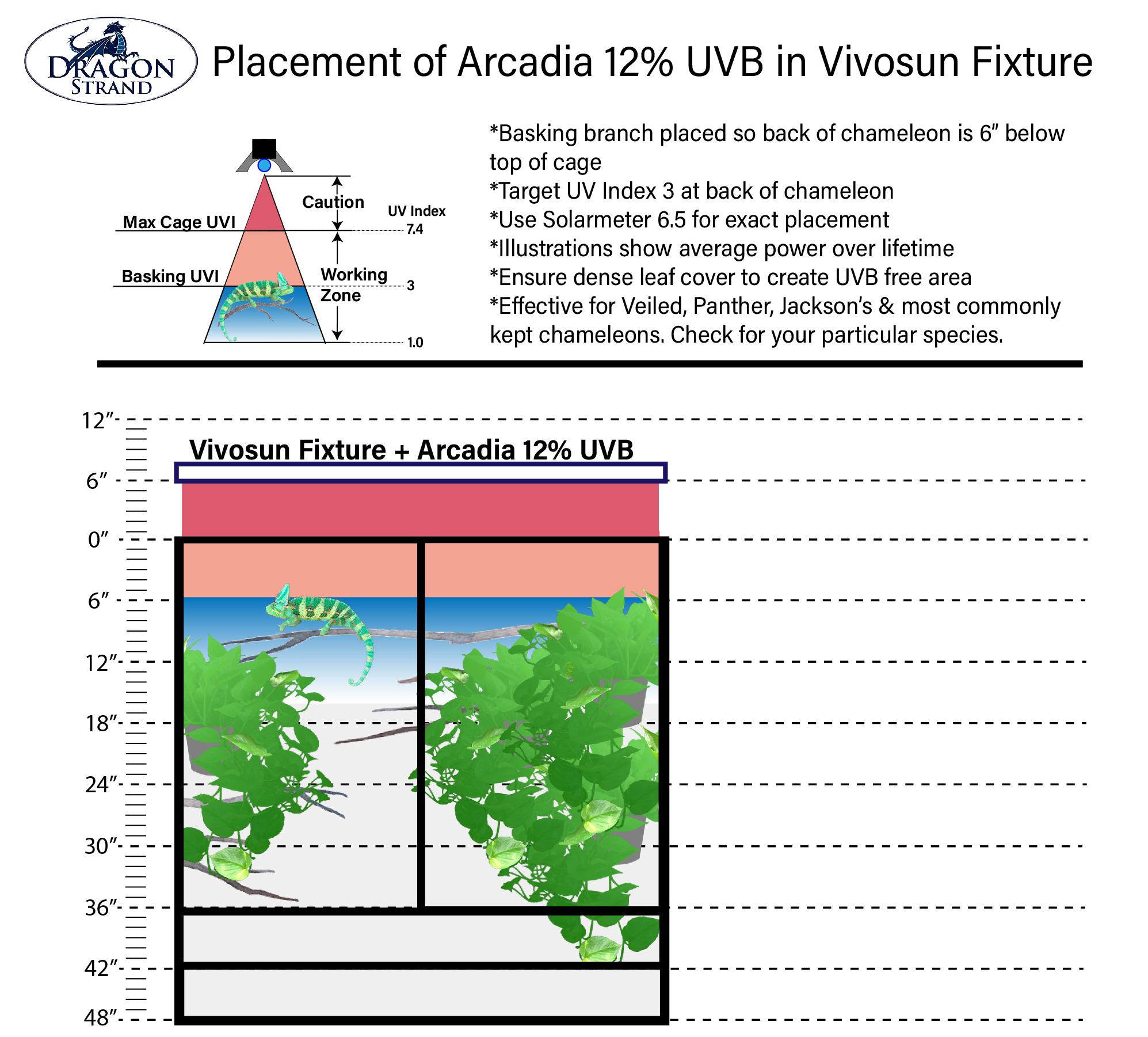 Large Atrium 12% UVB placement