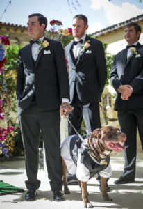 Weddings with Pets