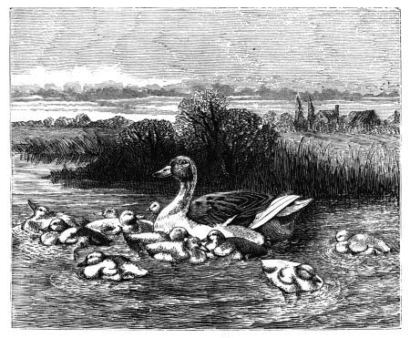 Nature Poems for Kids Ducks and Ducklings