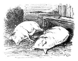 Animal Poems for Children