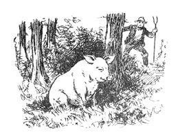 Poems about Pigs for Kids