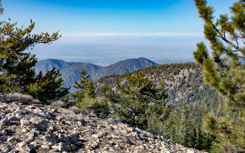 Mt Pinos - Los Padres National Forest