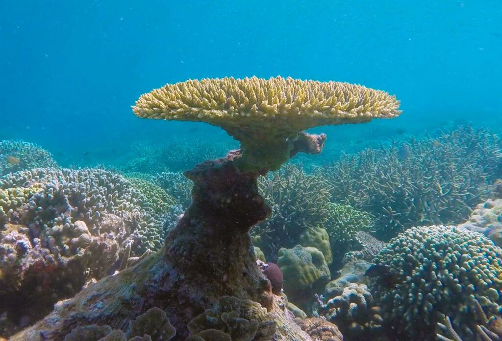 Coral Reef, Philippines