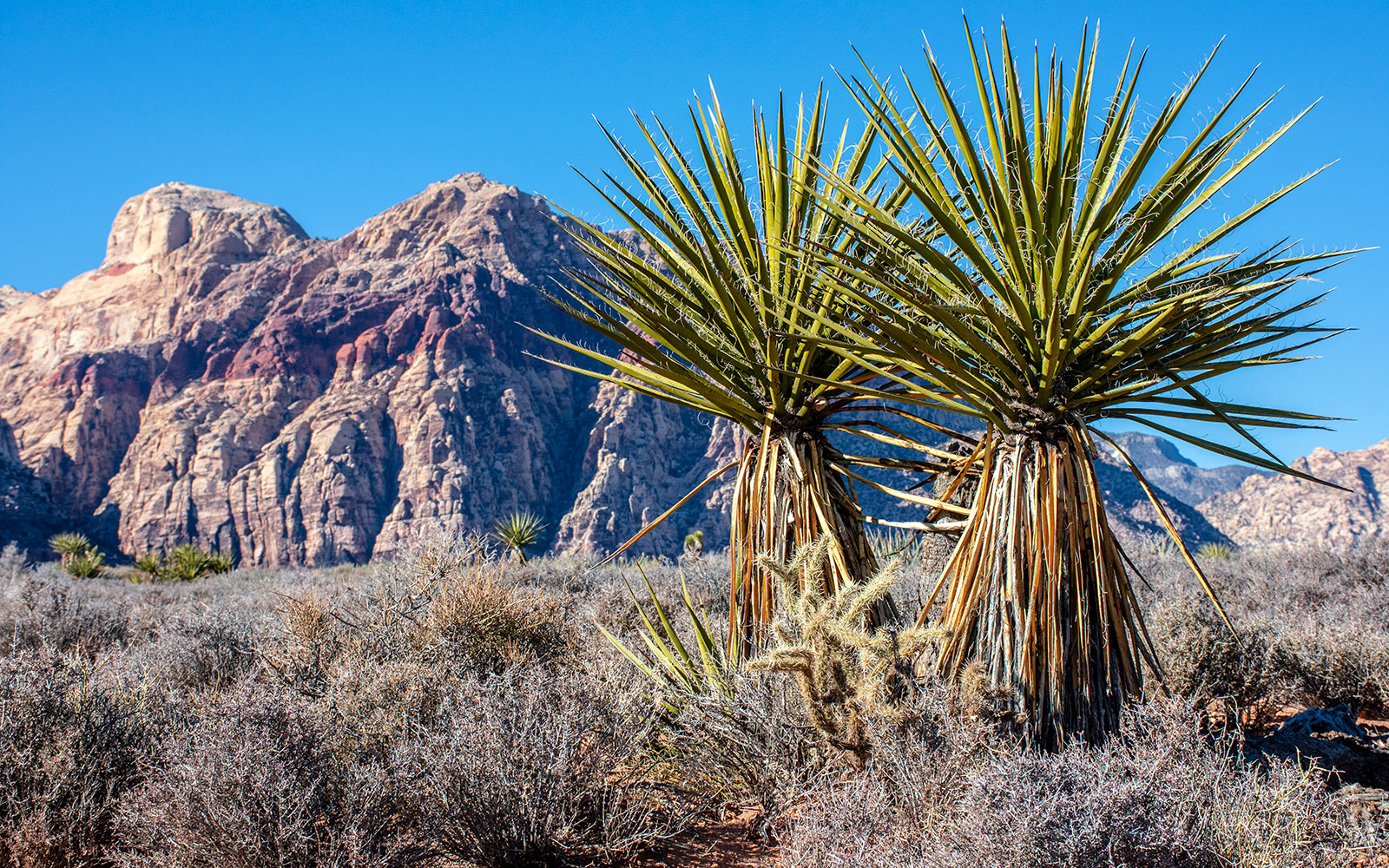The Red Rocks area outside Las Vegas offers great hiking less than an hour from the casinos on the Strip.