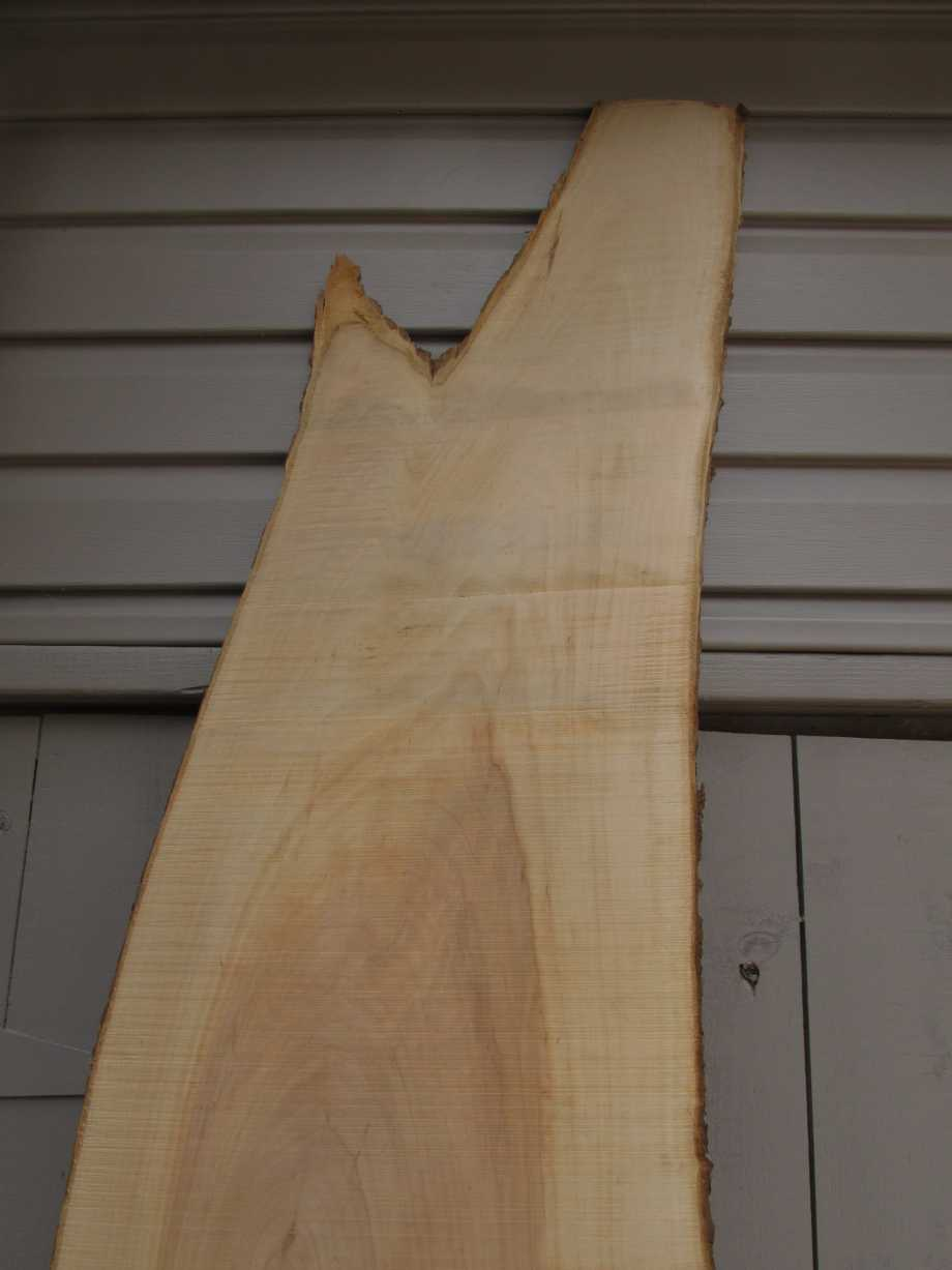 closeup of top grain - Apple wood live edge slab for sale 15 wide by 72 inches long