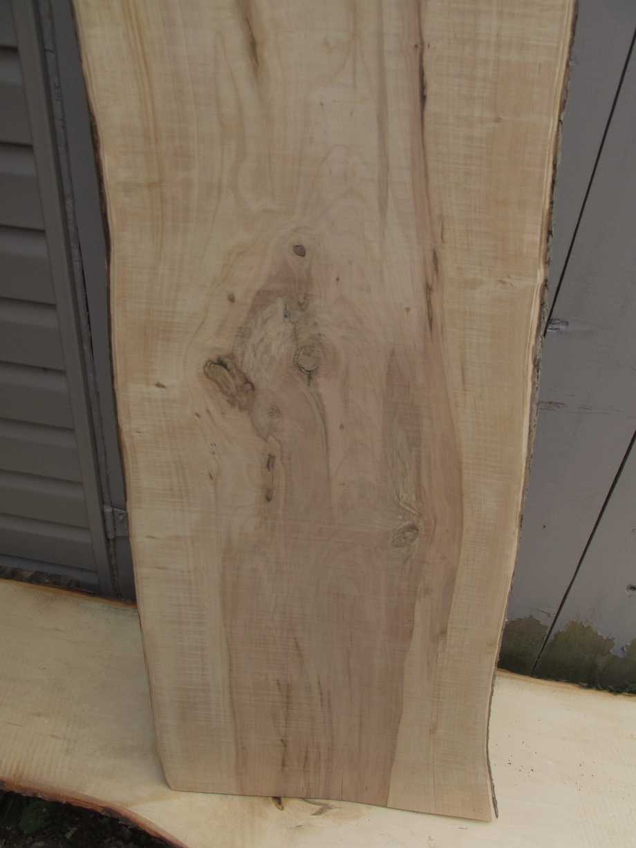 Bottom section grain view - Apple wood live edge slab for sale 16 wide by 60 inches long