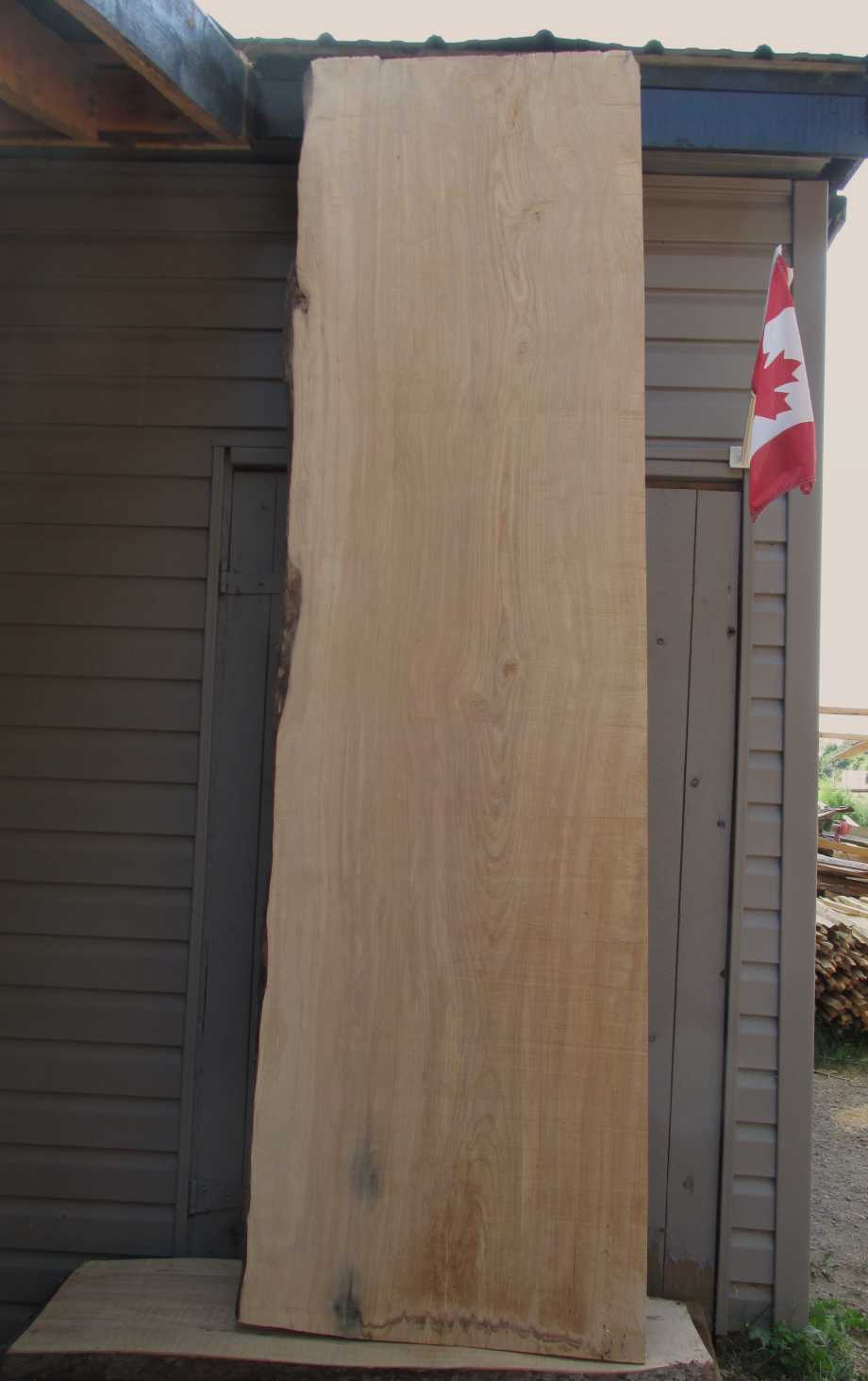 Main image - Ash wood live edge slab for sale 28 wide by 99 inches long