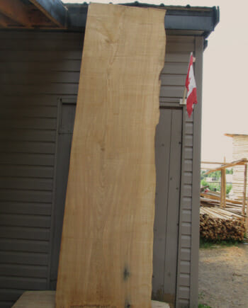 Main image - Ash wood live edge slab for sale 27 wide by 99 inches long