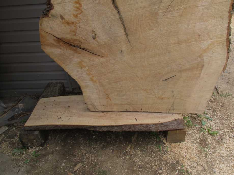closeup of grain bottom section - Huge Ash wood live edge slab for sale 48 wide by 106 inches long