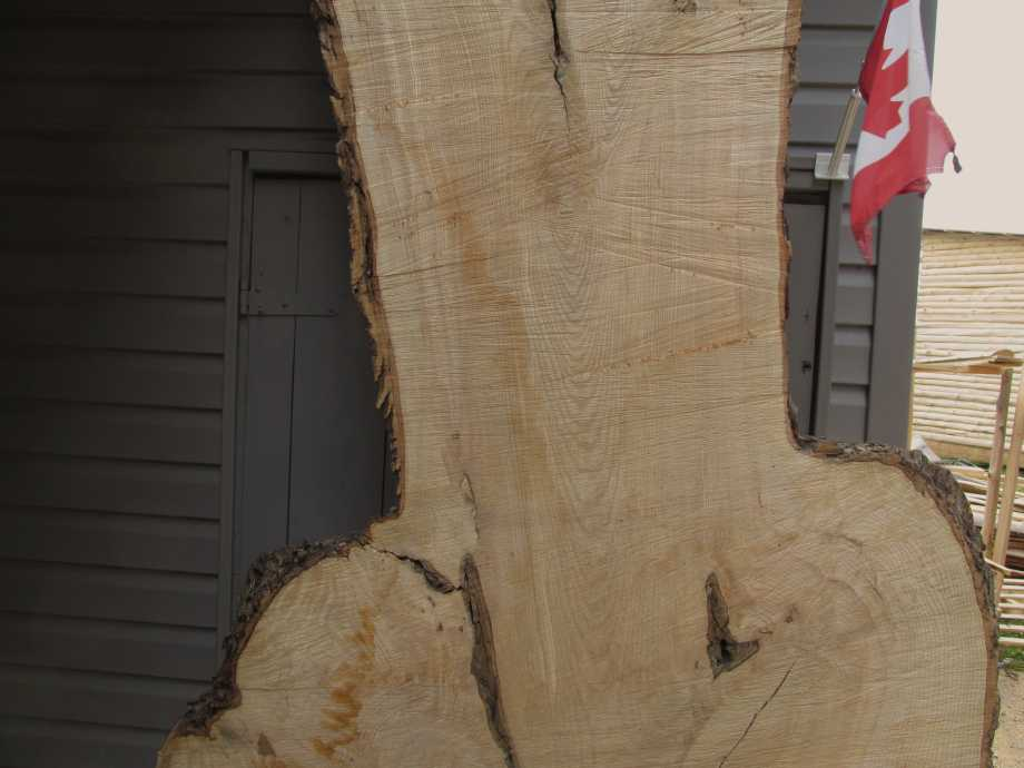 closeup of grain middle section - Huge Ash wood live edge slab for sale 48 wide by 106 inches long
