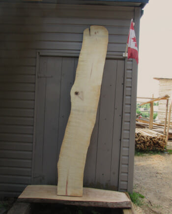 Main image - Spalted Maple wood live edge slab for sale 12 wide by 85 inches long