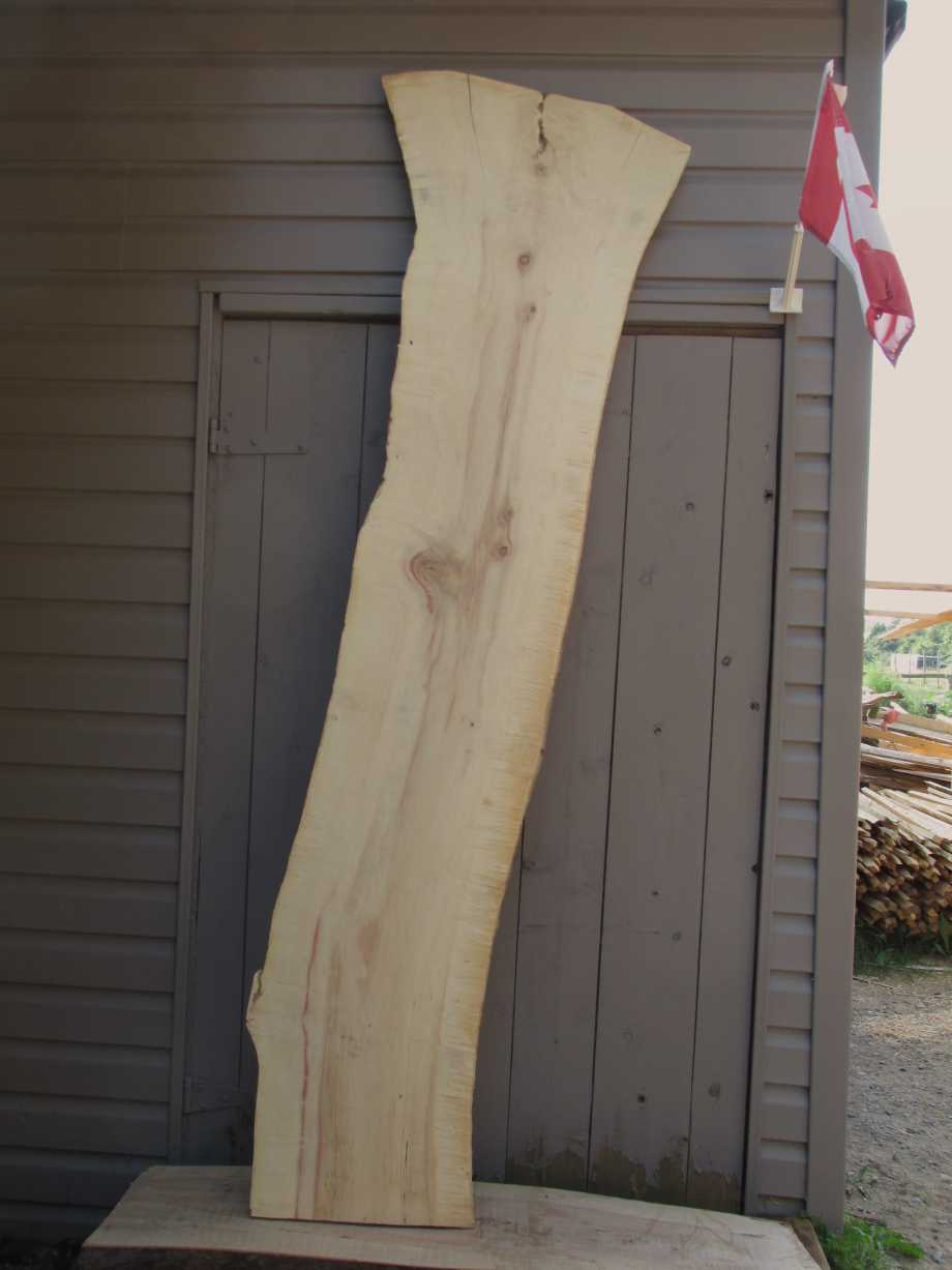 Main image - Spalted Maple wood live edge slab for sale 16 wide by 86 inches long