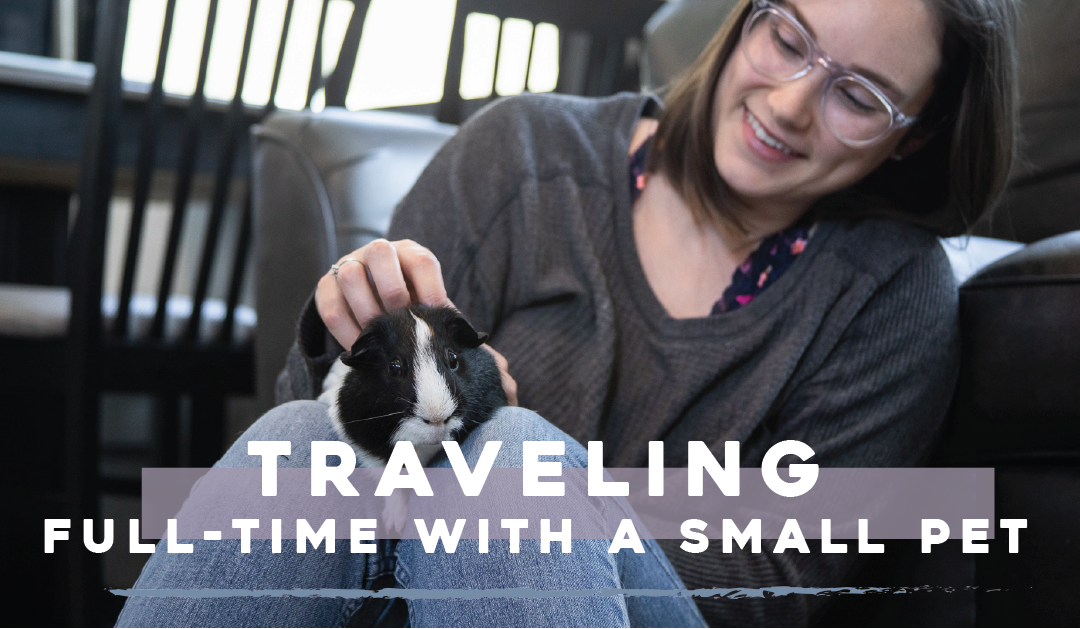traveling with a pet-01
