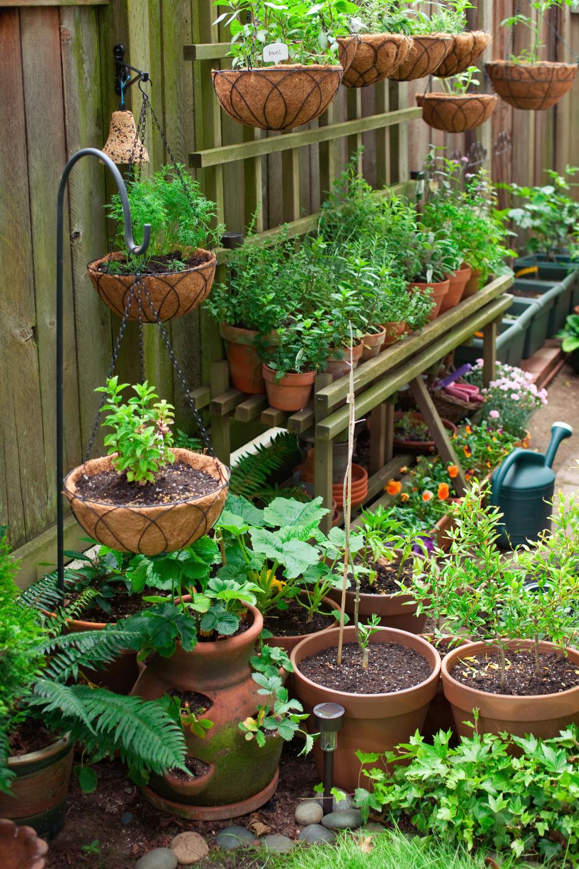 Gardening in Zone 6b