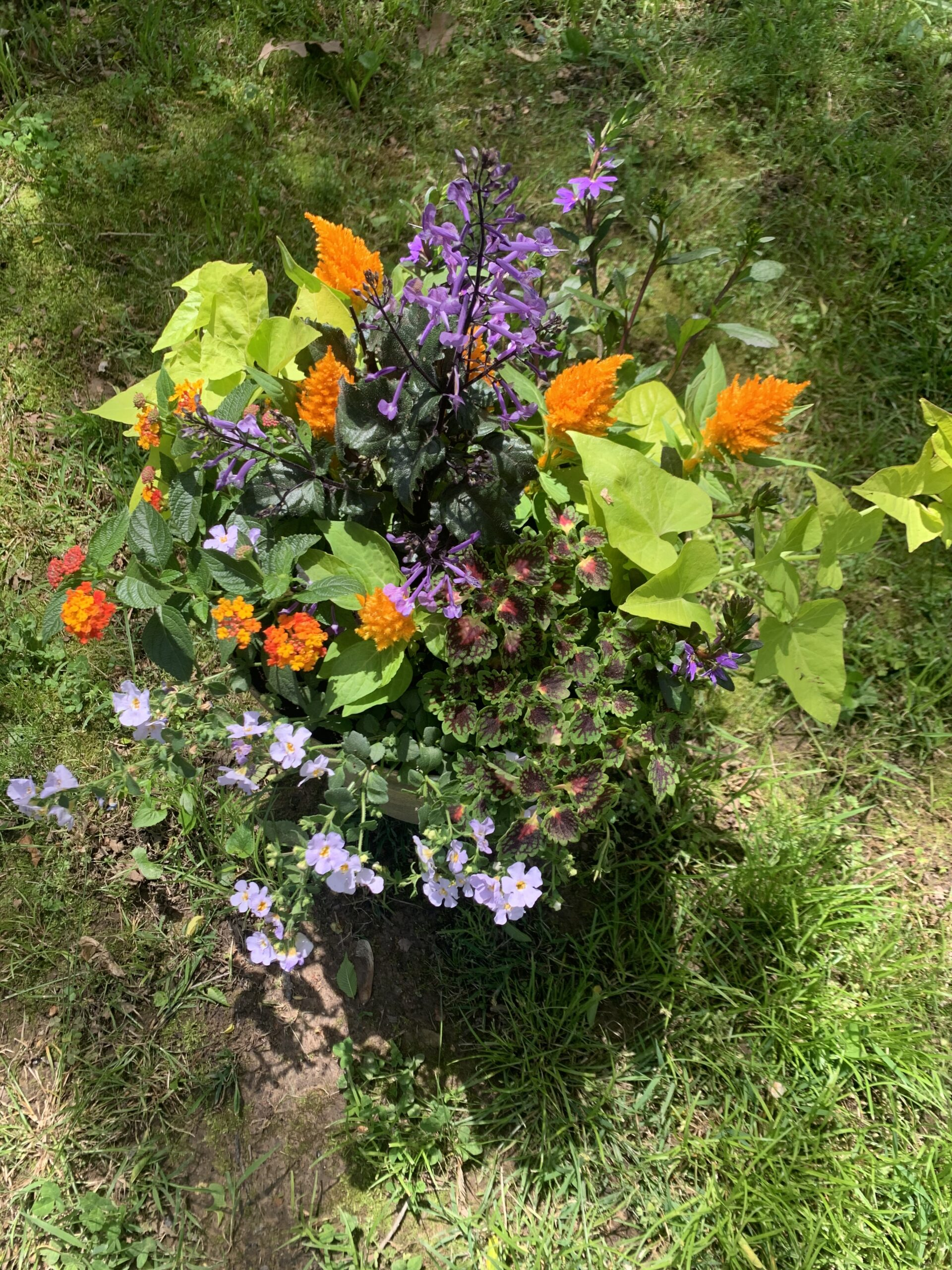 Making a Patio Pot of Blooming Plants