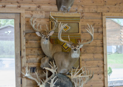 Hunting Lodge Trophy Mounts