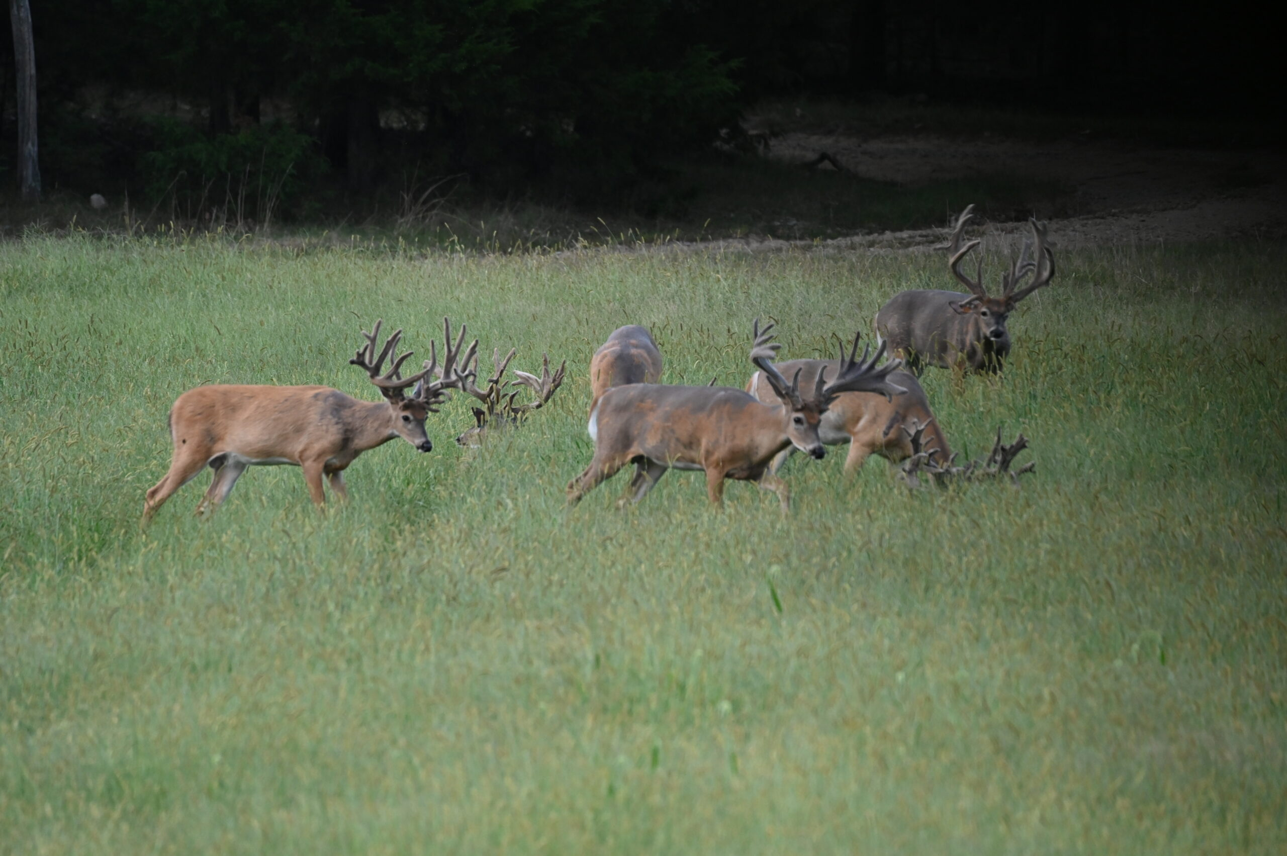 Missouri Trophy Deer Hunts at TLWT