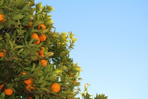 can you really lose weight with intuitive eating?