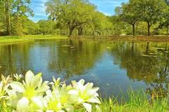 botanical-gardens-pond-bill-barber
