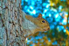 curious-squirrel-bill-barber