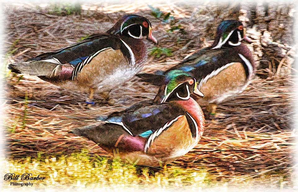 Wood-Ducks-Faux-Painting-web.jpg