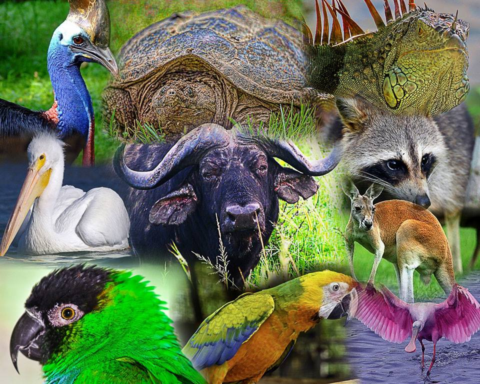 wildlife-collage.jpg