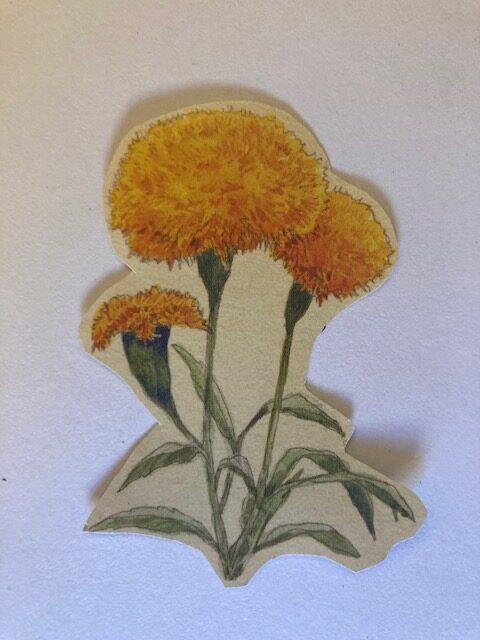 Aztec Marigold Blossom/Cempasúchil
