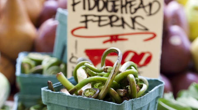 Fresh Fiddlehead Ferns at Your Farmers Market