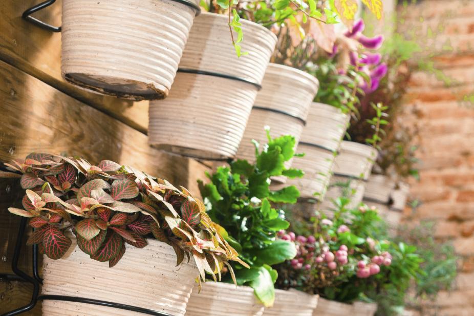 Home Herb Pots