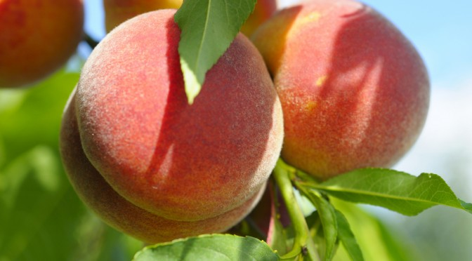 In-Season, Healthy Peach Recipes